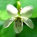 Violet White Photo 8