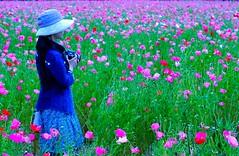 Flower Hunting:美人在花里