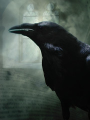 Edgar Allen Poe - The Raven (oddsock) Tags: ego creativecommons edgarallenpoe theraven fxr weeklyphotoshopcompetition maggieme digitalresonance week146 awardtree magicartoftextures empyreanfantasies doortoriver ~amahra58~ ratsj