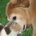 Interspecies Bonding:  Jordan bonds with Ruthie the Barn Cat