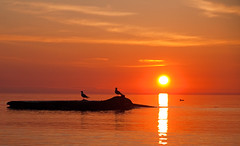 Sunrise & Seagulls (Mauricio Meja) Tags: morning sunset red orange cloud sun lake reflection bird art nature water silhouette yellow wisconsin sunrise wow point dawn coast early wind dusk seagull peaceful tranquility lakemichigan serenity serene wi tranquil cloudscape racine windpoint diamondclassphotographer sailsevenseas