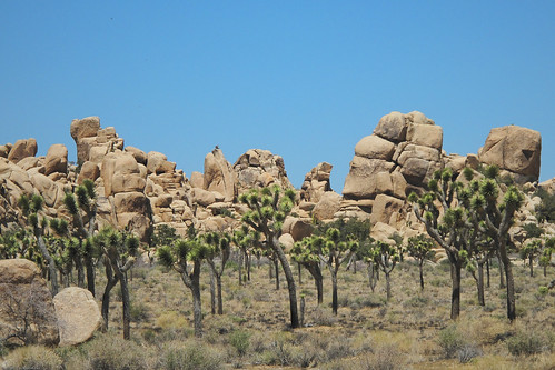 Joshua Tree Woodland by you.