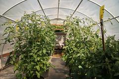 Greenhouse garden