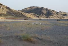 saluki hunt 5 (shine_on) Tags: rabbit dogs car truck puppy desert offroad 4x4 dunes hunting saudi arabia toyota suzuki jeddah suv fj landcruiser saudiarabia cruiser hunt saluki  fj40 fjcruiser    bahra    feshfesh