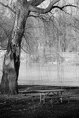 Picnic (NateFischPix) Tags: park winter bw white black tree ice nature water table outdoors vines picnic solitude quiet searchthebest nathan empty branches peaceful iowa iowacity solitary fischer platinumphoto platinumheartaward nathanfischer natefischpix