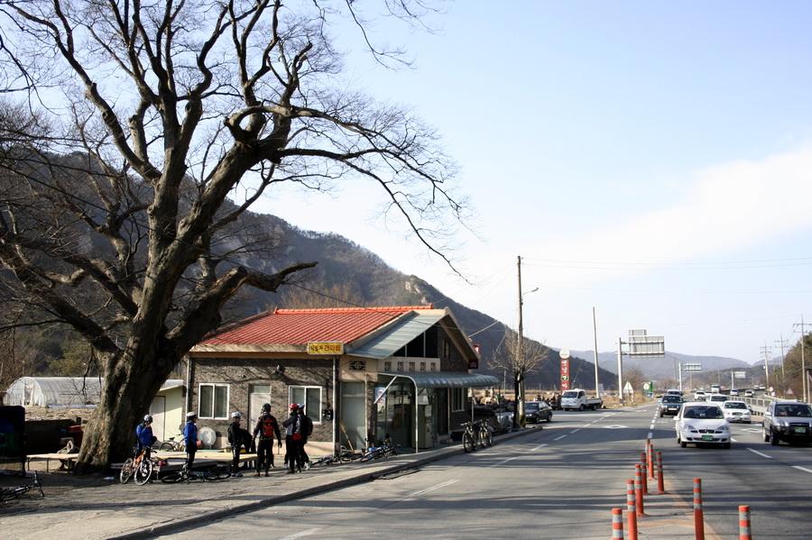 Park Jeong-ja Tree