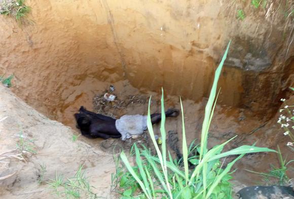Un fou couché dans une fosse à Kinshasa