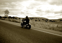 PCH (avilon_music) Tags: california road bw sepia blackwhite highway motorcycles harley 101 pch cycle harleydavidson motorcycle southerncalifornia softail californiacoast harleys pacificcoasthighway fxst 101highway patbianchi markpeacockphotography 1987harley 87softail