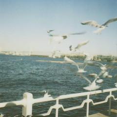 (.niCky.) Tags: film polaroid sx70 seagull 600 noedit   polaroiddiary