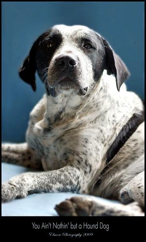 ain but a hound dog