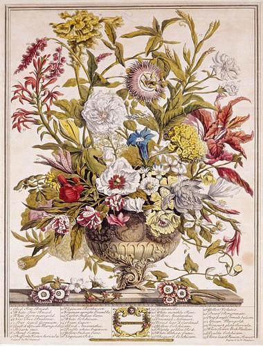 009- Septiembre- Los doce meses del año en flores