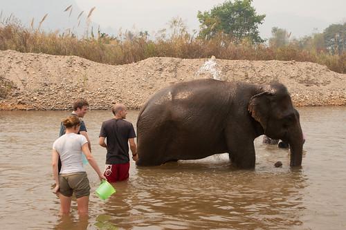 Elephant Nature Park-052