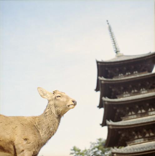 Nara*
