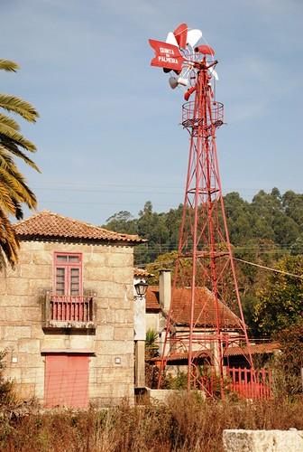 Palmeira de Faro 019
