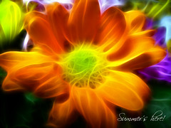 Summer's here! (Gilbert Rondilla) Tags: camera flowers plants flower nature photomanipulation polaroid photography photo philippines mums gilbert filipino notmycamera own pinoy weddingflowers borrowedcamera catchycolorsorange rondilla photoshopplugin i733 malaysianmums notmyowncamera cmwdorange polaroidi733 fractalius gilbertrondilla gilbertrondillaphotography luisianian polaroid7mpdigitalcamera