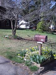 spring yard - asheville