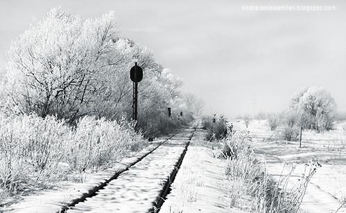 despre alb ca zapada (XII)