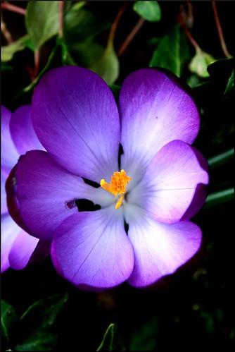 flower2 von Ihnen.