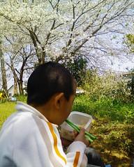 桜:裏の畑でお花見