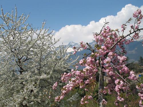 Der Japanische Garten mit Blick auf die verschneite Texelgruppe