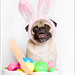 My Easter Bunny by [Christine]