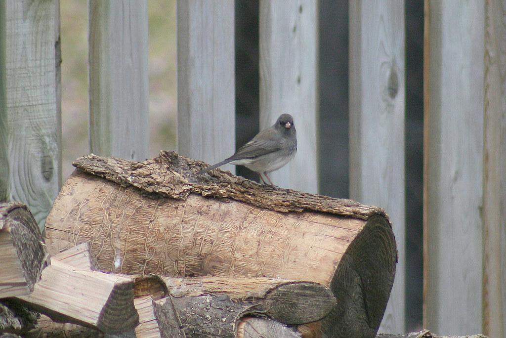 bird on firewood