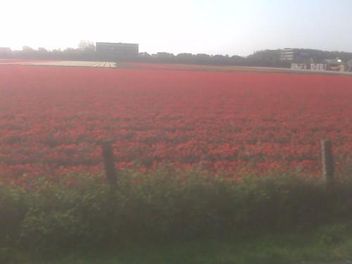 Vandaag is rood