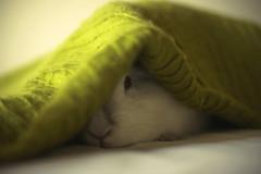 Thank you (Sandra_R) Tags: rabbit bunny green canon thankyou hiding peeking rabit 50mmf14 blueribbonwinner