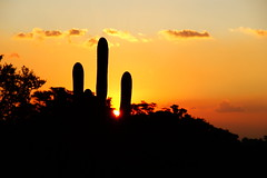 Pôr do Sol em Valinhos (Ingrevallo) Tags: sunset cactus sun sol del cacti de landscape do interior paulo antonio puesta são por cacto pôr valinhos ingrevallo