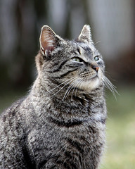 Looking Up (Bill McBride Photography) Tags: ny newyork cute animal cat canon eos rebel li longisland feral xsi 450d 55250 canon450d efs55250 canonxsi
