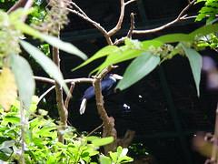 犀鳥 Bucerotidae