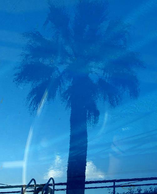blue-pool-palm-3185