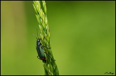Ascension (6line8) Tags: beatle scarab sonyalpha300