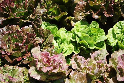 garden5o9.jpg