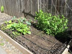Garden May 31