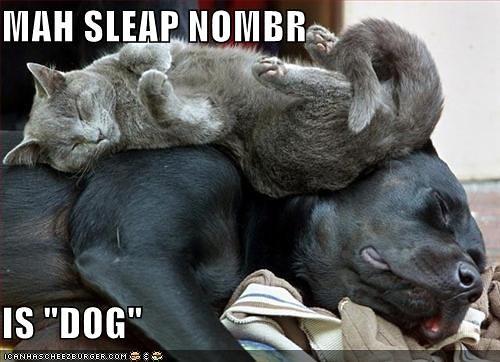 bedsleepnumber