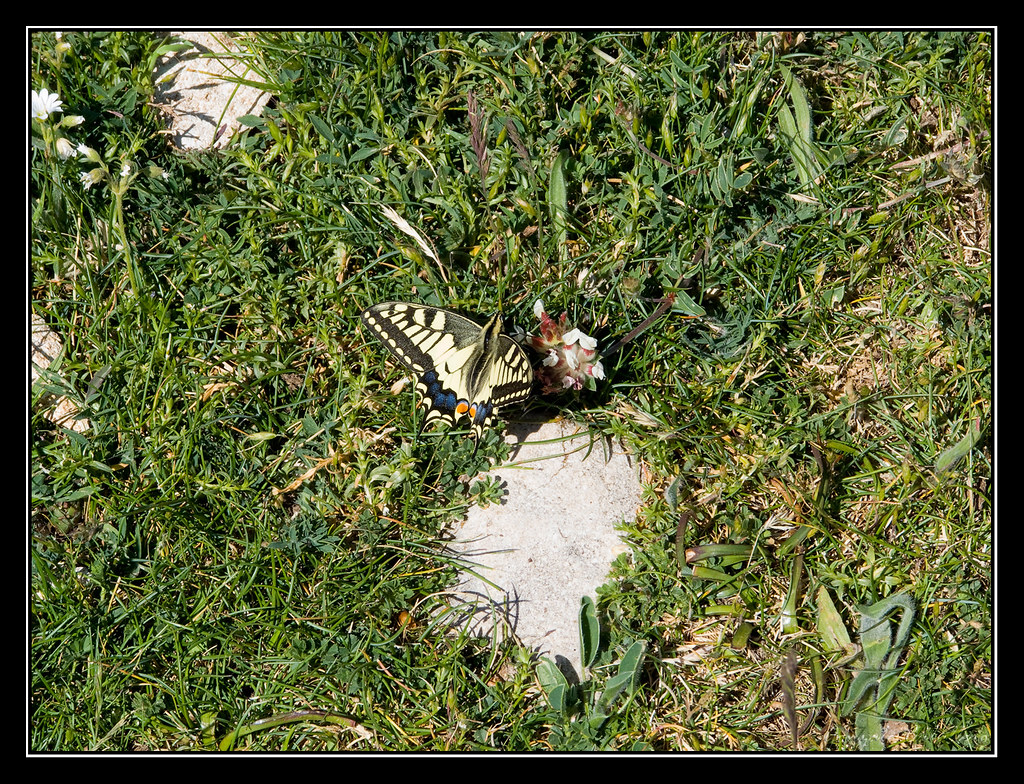 Mariposa en el Mortxe