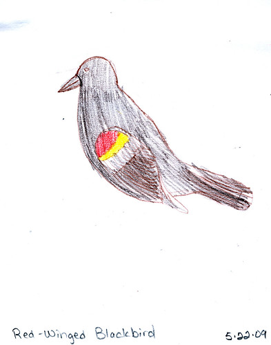 Red-Winged Blackbird by Zippy (age 9)