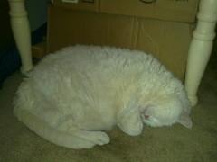 Sleeping Pandora