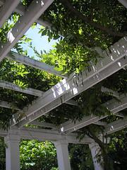 Frelinghuysem Arboretum! 12