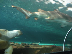 At the aquarium (gdaysydneysider) Tags: darlingharbour sydneyaquarium