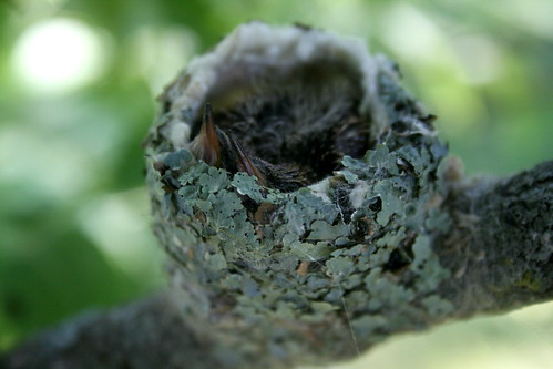 Attleson Farm: Hummingbird Nest