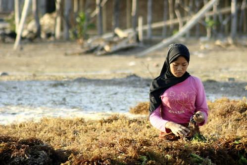 seaweed sorter, Kaliantan