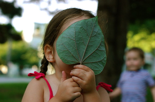 but i asked you to find a big leaf