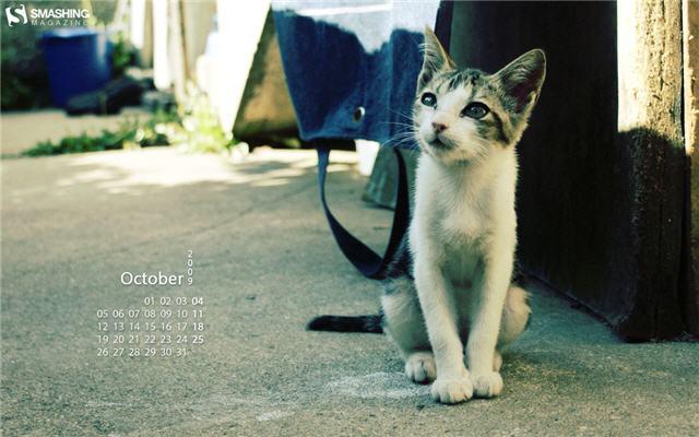 2009년 10월 배경화면