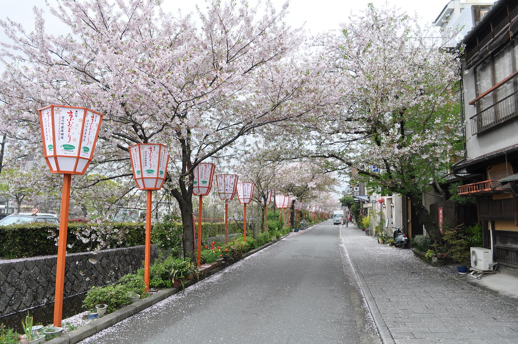 Sakura @ Kyoto