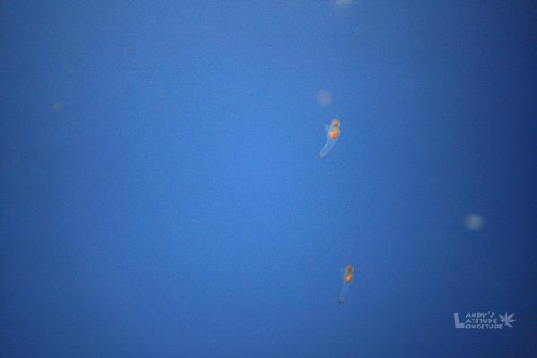 2009北海道-D4-4-鄂霍次克海展望_07.jpg