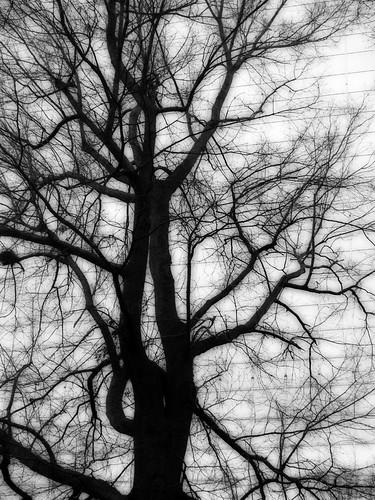 OSH trees