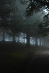 . Neblina . (Gabi Rached) Tags: