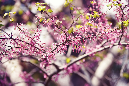 spring09 014 pink purple